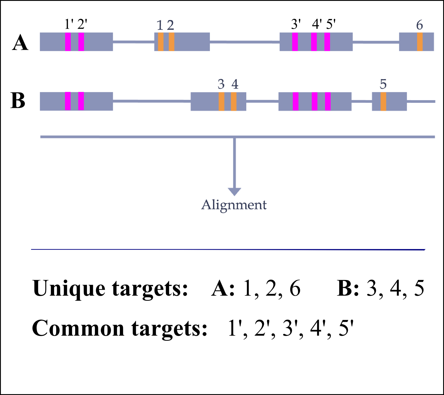 Input genes for specific CRISPRs