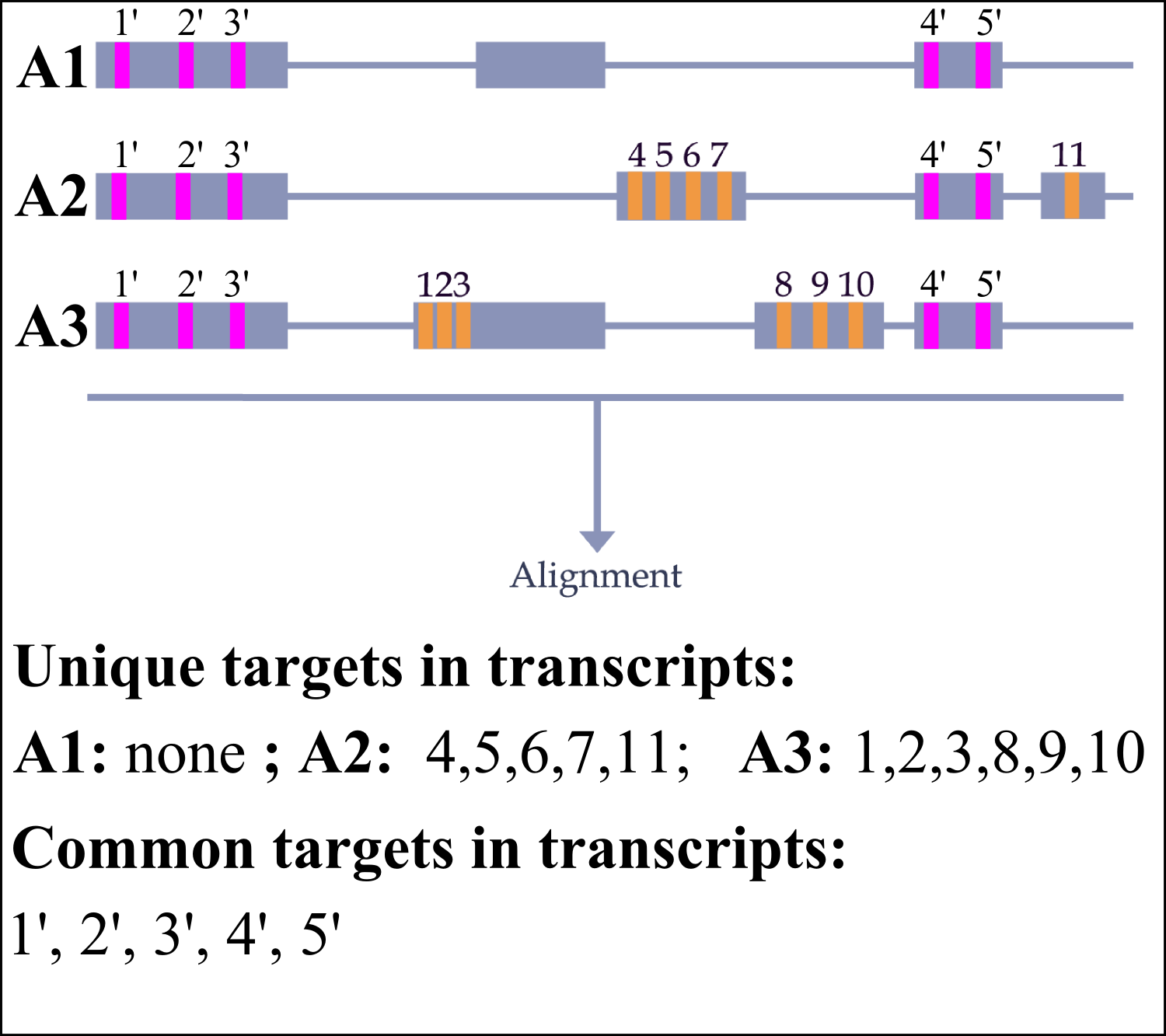 Single gene input - transcripts targets